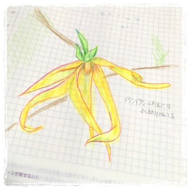 f:id:kuragestmimu:20161027002620j:plain