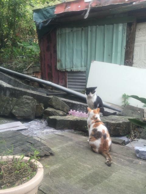 f:id:kuramae-taiwan:20181222221856j:plain