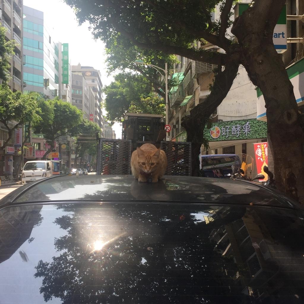 f:id:kuramae-taiwan:20181224215002j:plain
