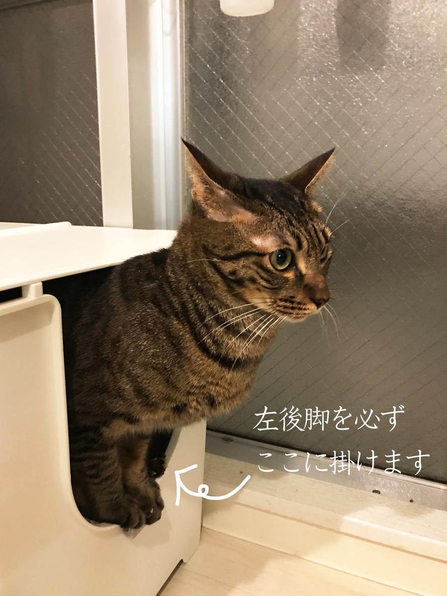f:id:kuramae-taiwan:20190506170451j:plain