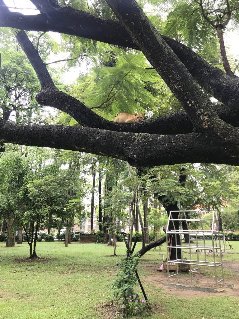 f:id:kuramae-taiwan:20190725110047j:plain