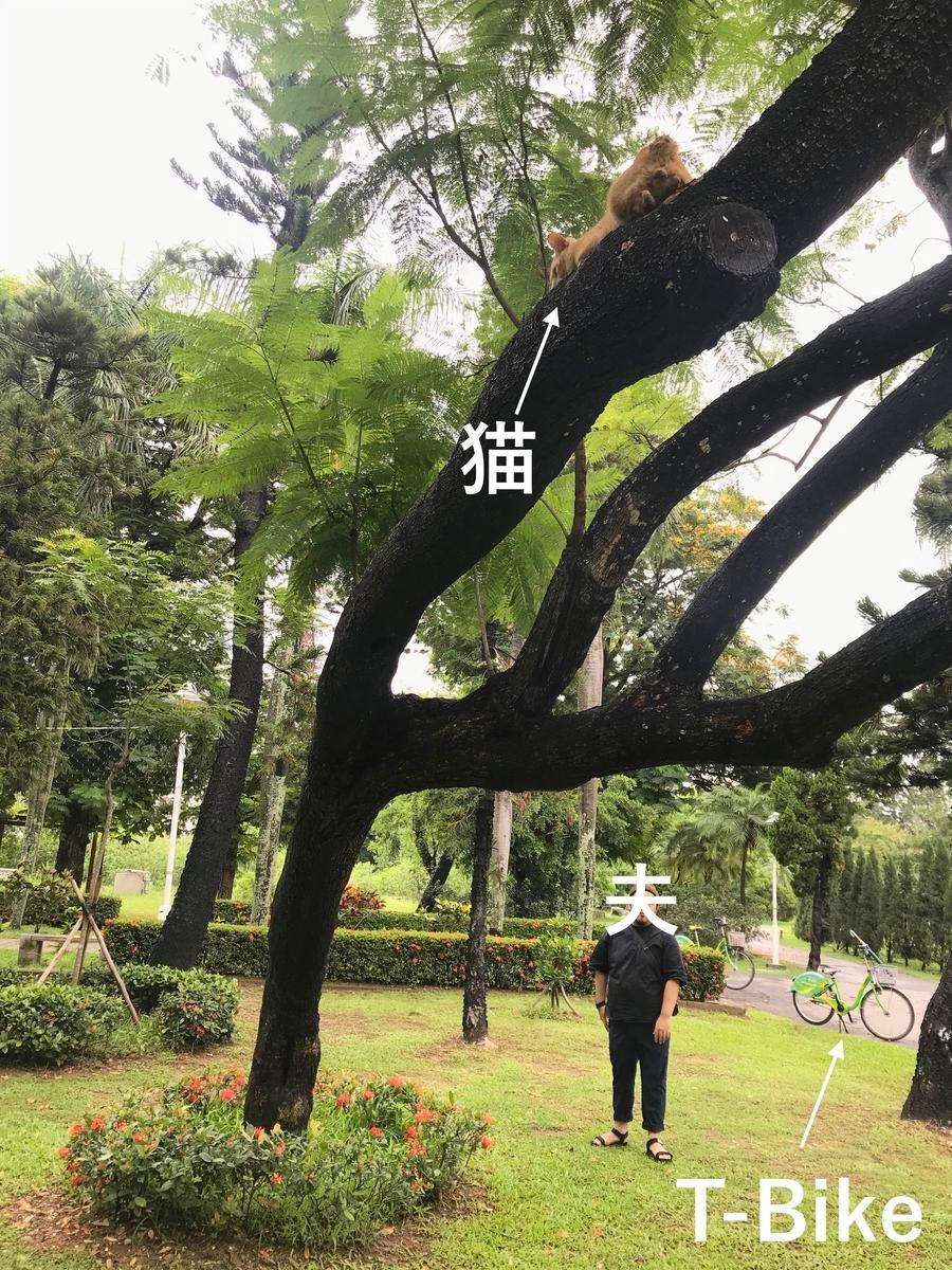 f:id:kuramae-taiwan:20190725110801j:plain