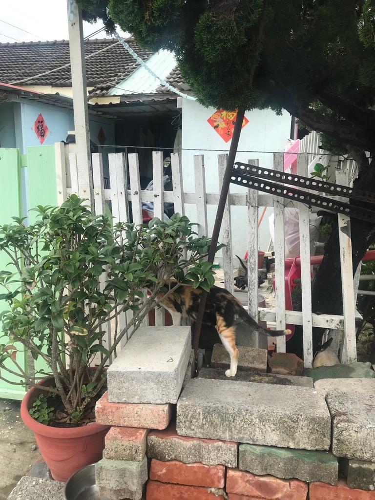 f:id:kuramae-taiwan:20190817211618j:plain