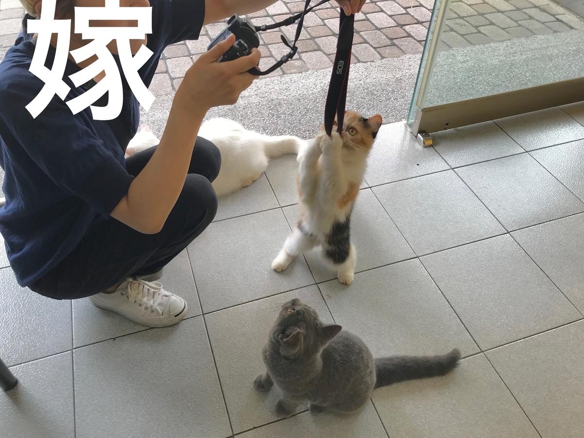 f:id:kuramae-taiwan:20191003005557j:plain