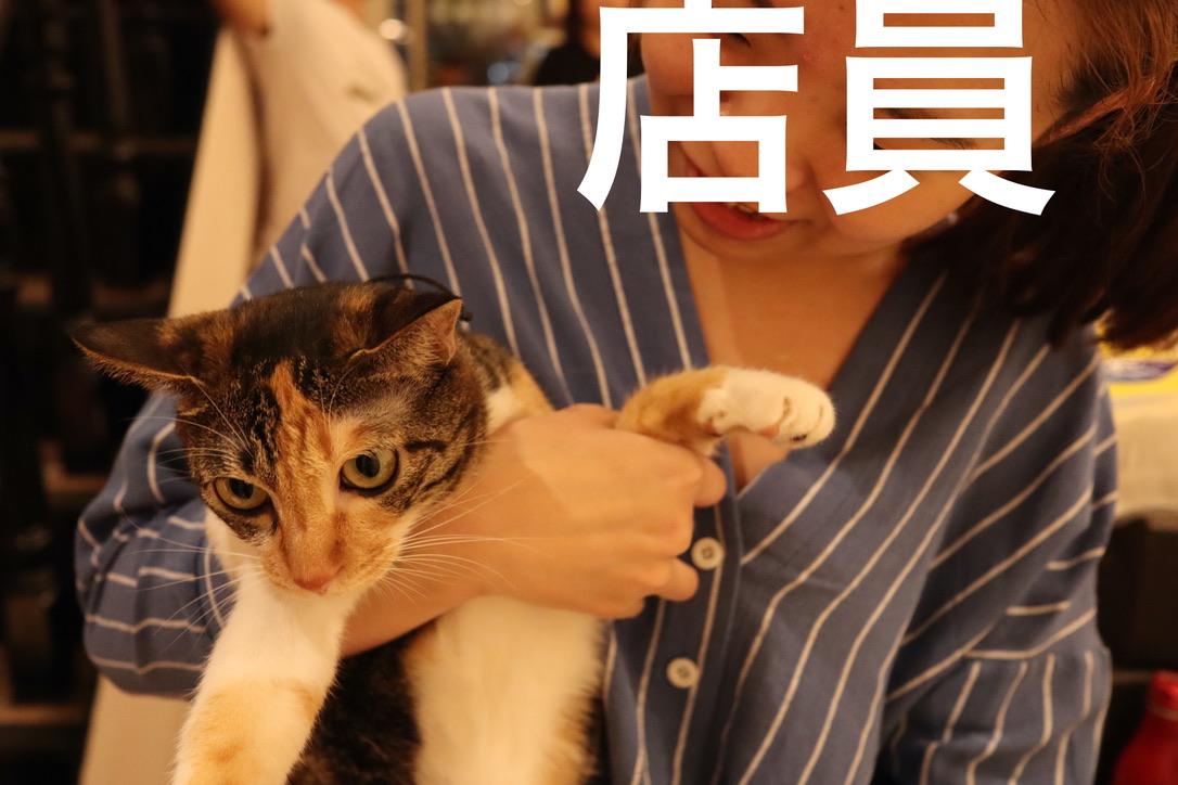 f:id:kuramae-taiwan:20191201170241j:plain