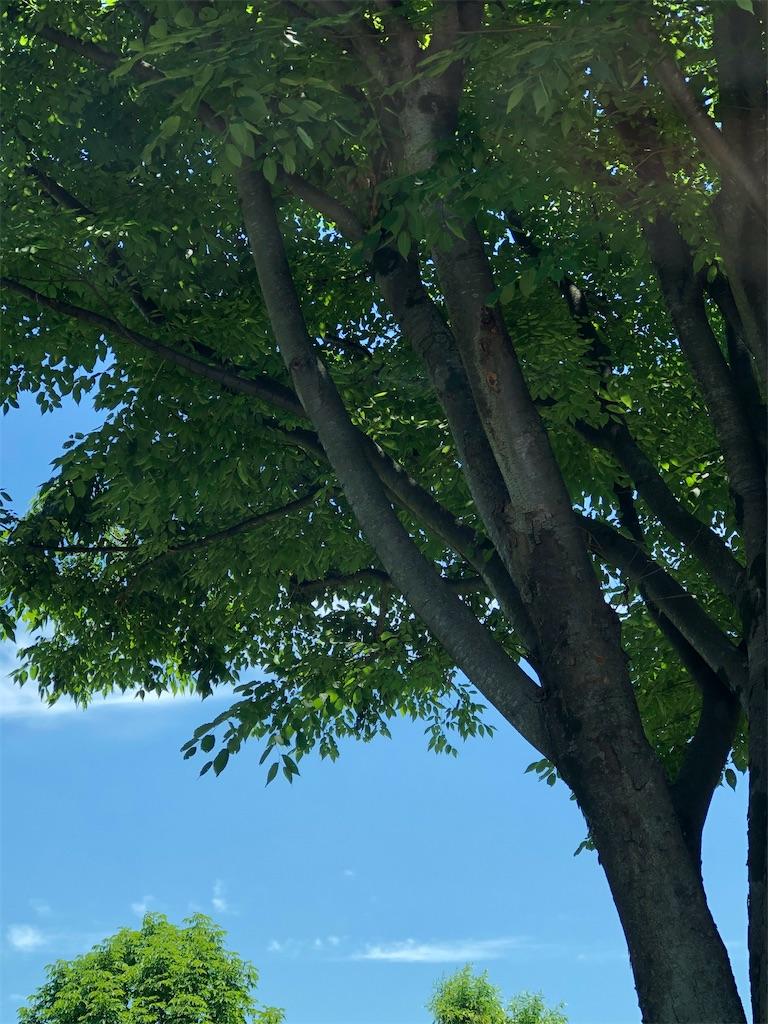 f:id:kurashi-kenyaku:20200625122712j:image