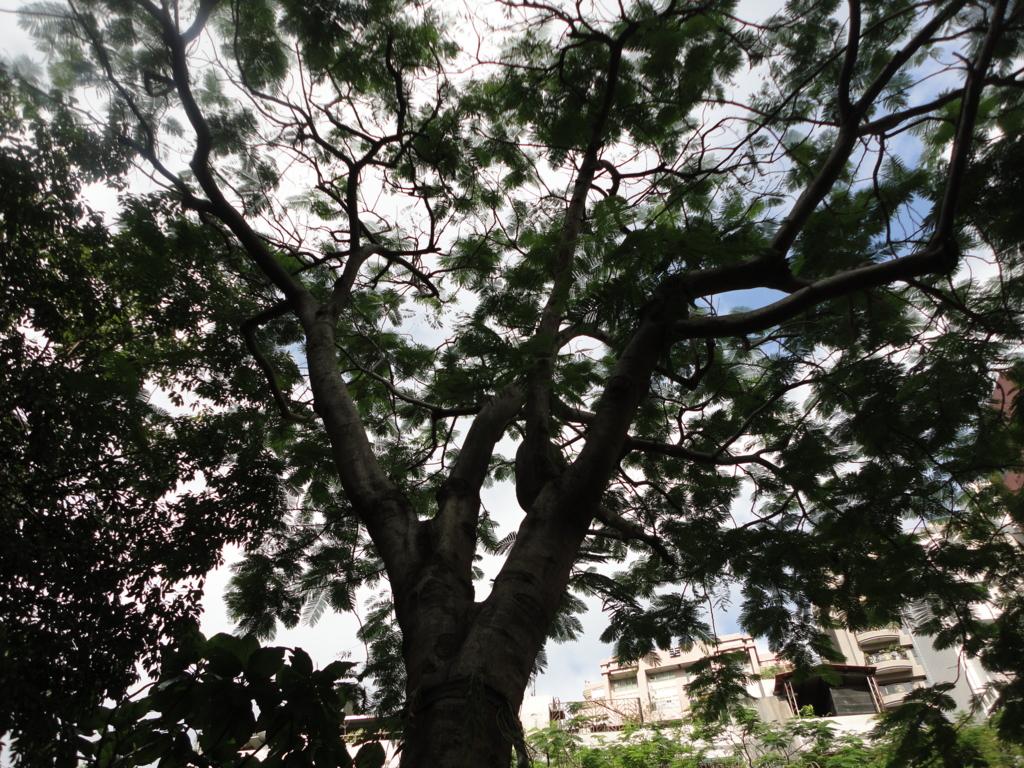 f:id:kurashi_chie:20170103113558j:plain
