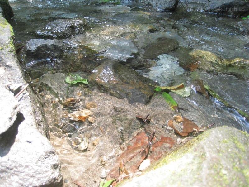 湧き水汲み