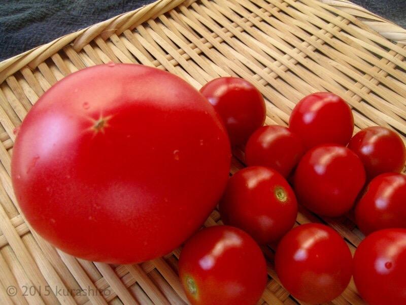 大家さんからもらったトマト