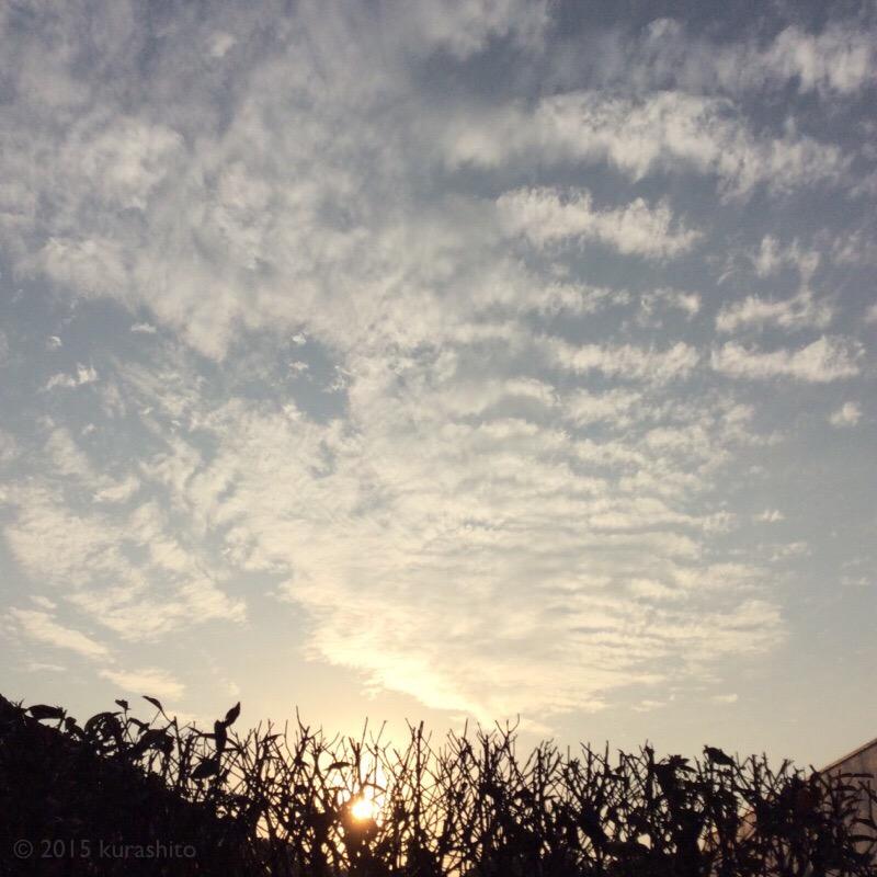 ふと気付けば、日々の暮らしの中、庭から見える夕空も、とても秋らしい景色。
