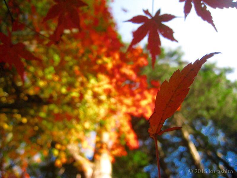 先週の水汲み場の、見事な紅葉。