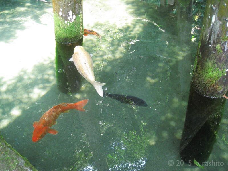 鹿島神宮、御手洗池