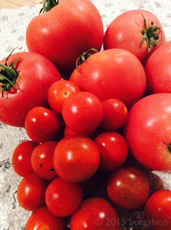 頂き物のトマト