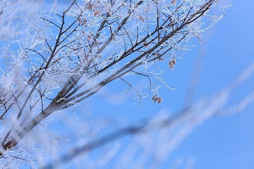 20170222 冬景色