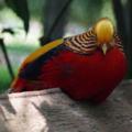 麻溝公園のカラフルな鳥