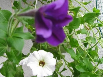 f:id:kuri1976:20080420091617j:image
