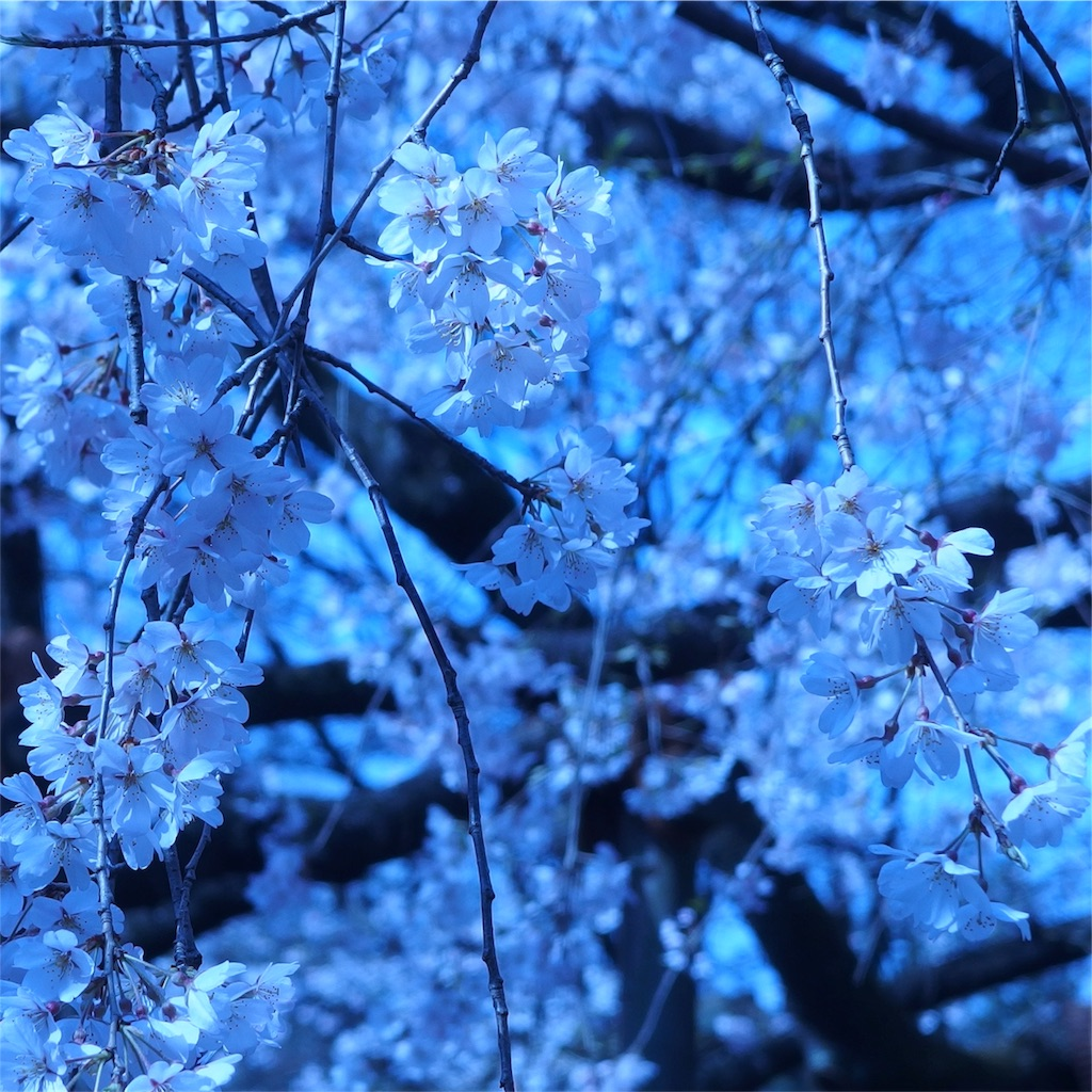 f:id:kuriguri:20180327043959j:image