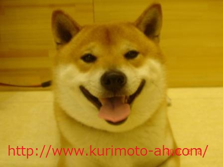 f:id:kurimotoah:20100202193422j:image:w360