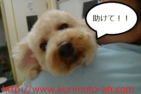 f:id:kurimotoah:20100529163707j:image:w360