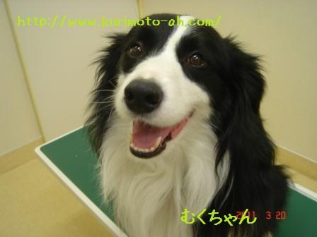 f:id:kurimotoah:20110320193446j:image