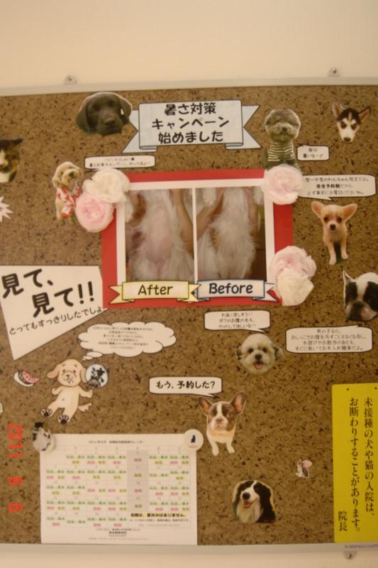 f:id:kurimotoah:20110806142228j:image:w640