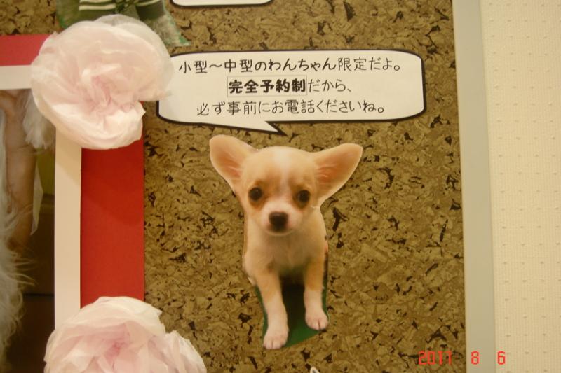 f:id:kurimotoah:20110806191944j:image:w360
