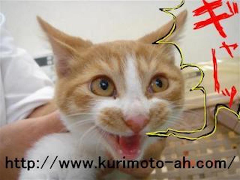 f:id:kurimotoah:20171202115359j:image