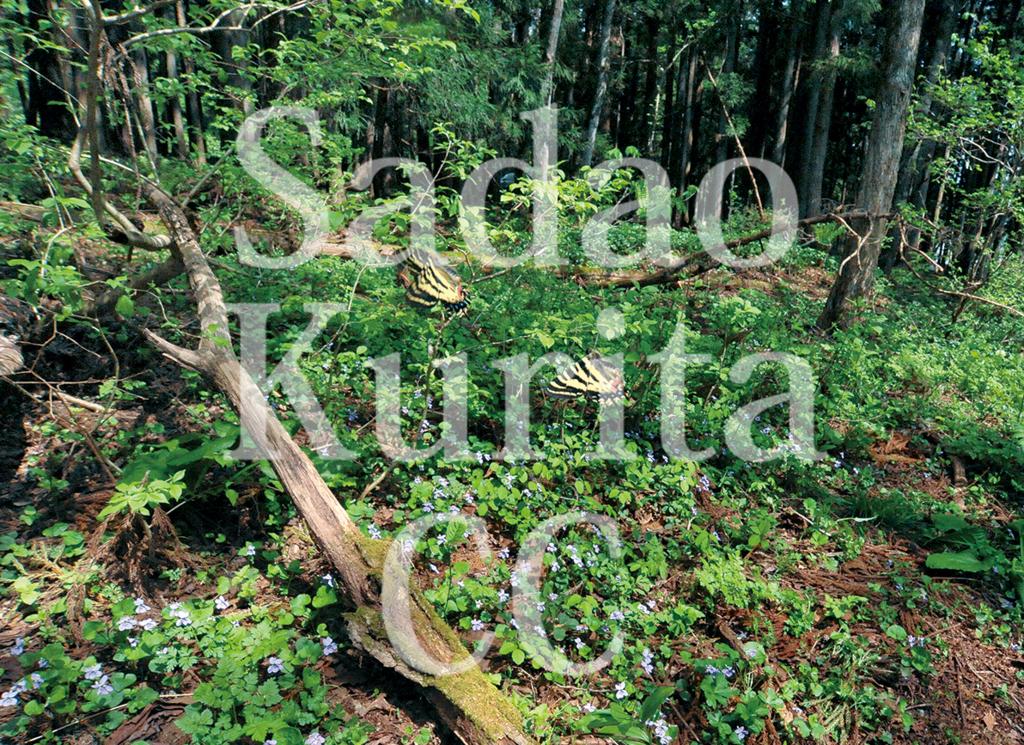 f:id:kuritasadao:20180418173908j:plain