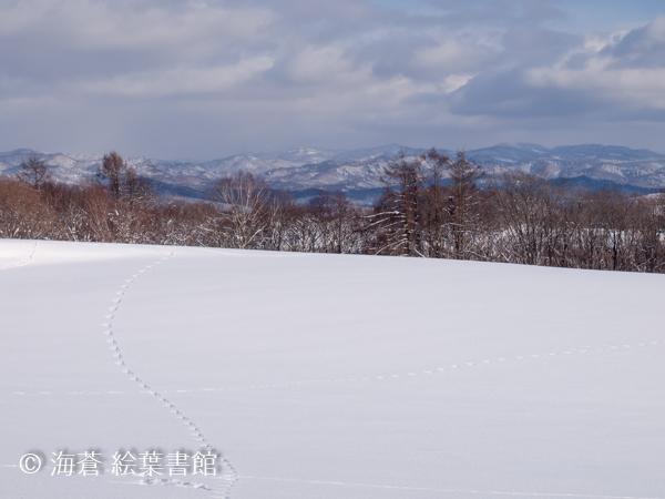f:id:kuriyama-iju:20190103041507j:plain