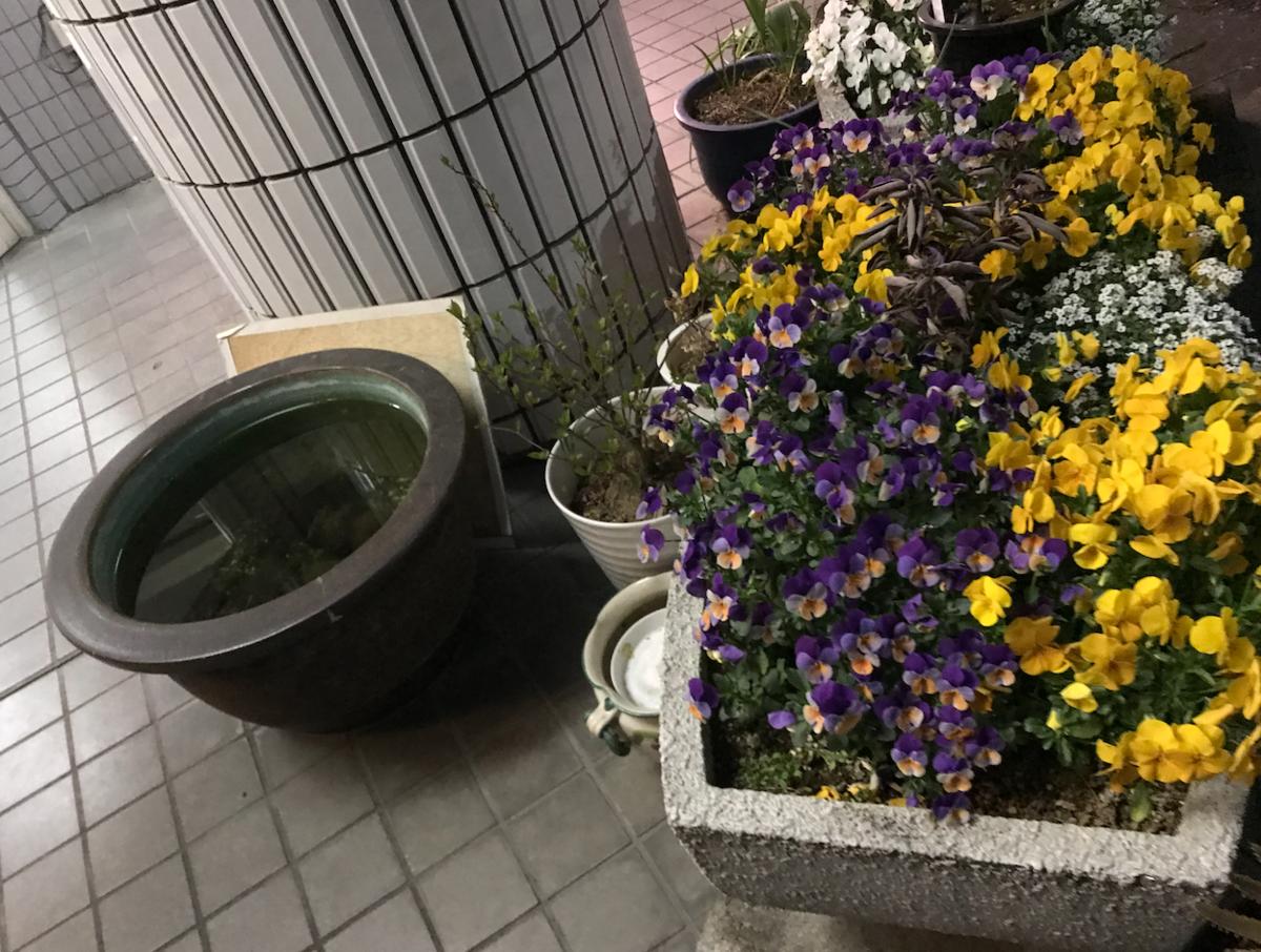 f:id:kuriyama1youth:20190329093658p:plain