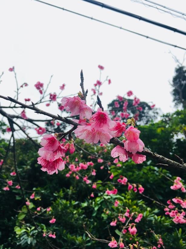 f:id:kuro-yan:20190214113049j:plain