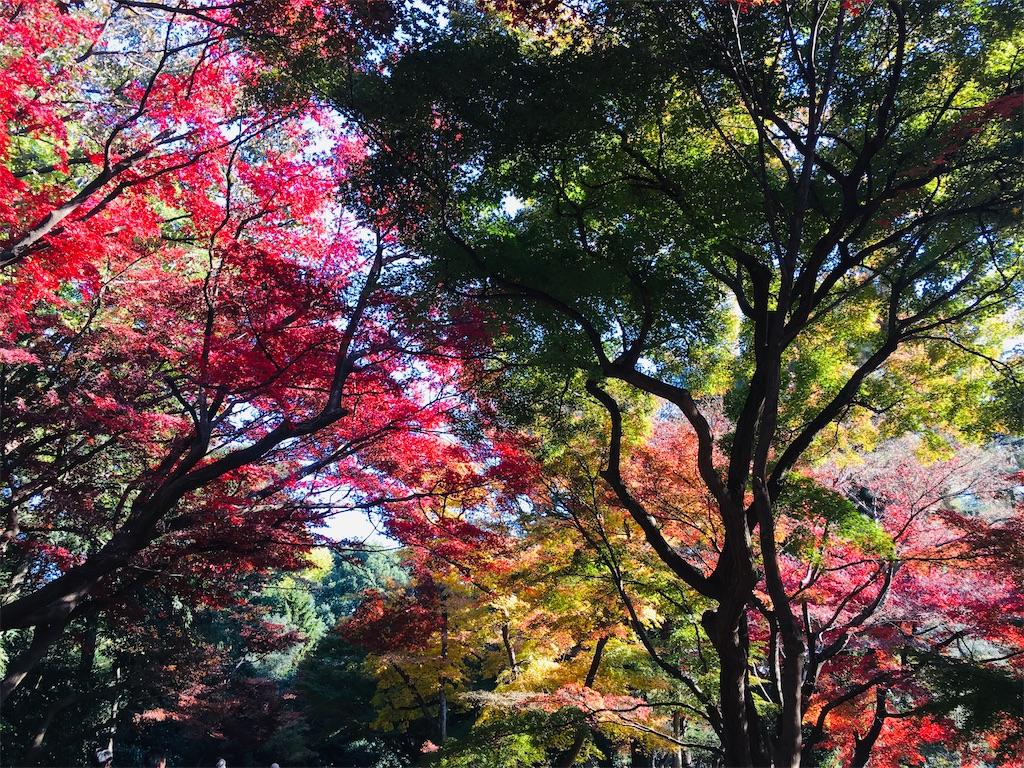 f:id:kuro-yan:20191204212123j:image