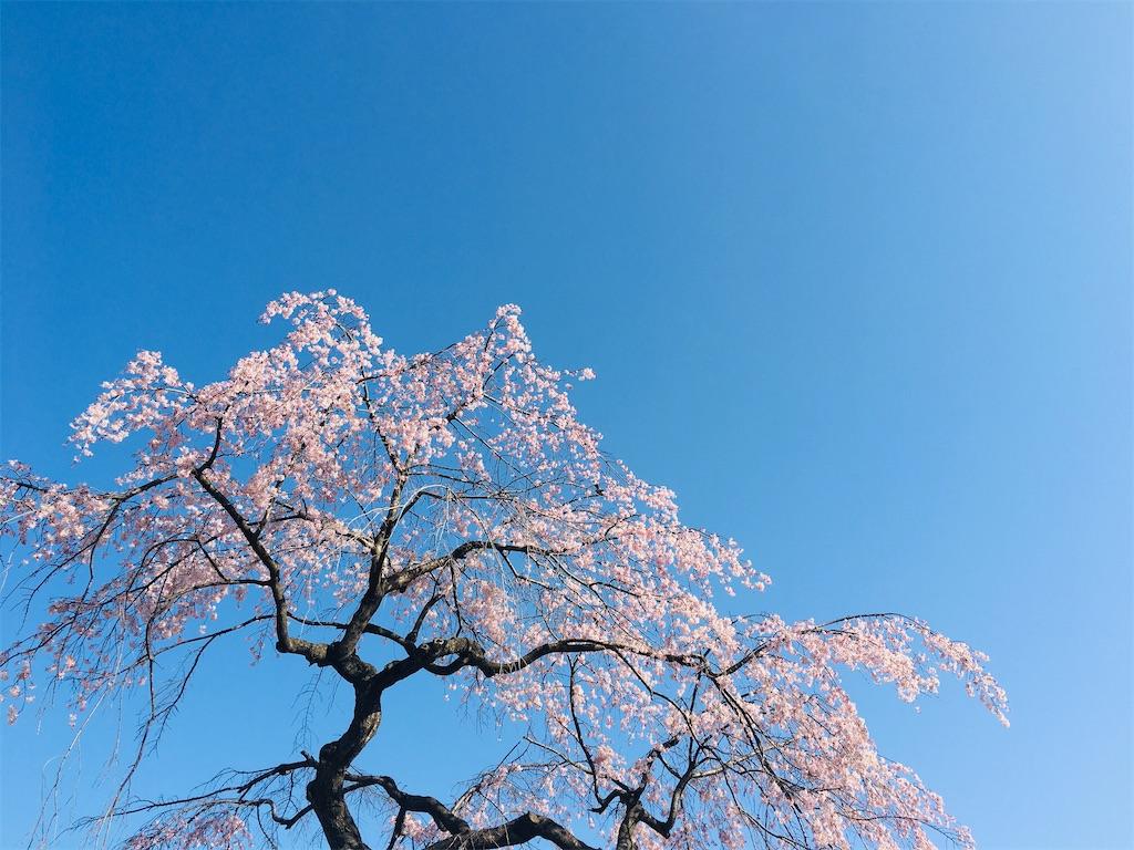 f:id:kuro-yan:20210323081027j:image