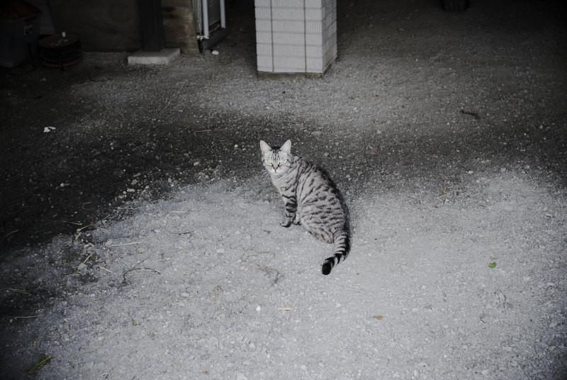 f:id:kuro0606:20101225202410j:image