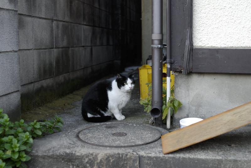 f:id:kuro0606:20101225202955j:image