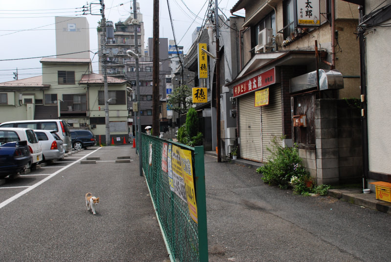 f:id:kuro0606:20101225203956j:image