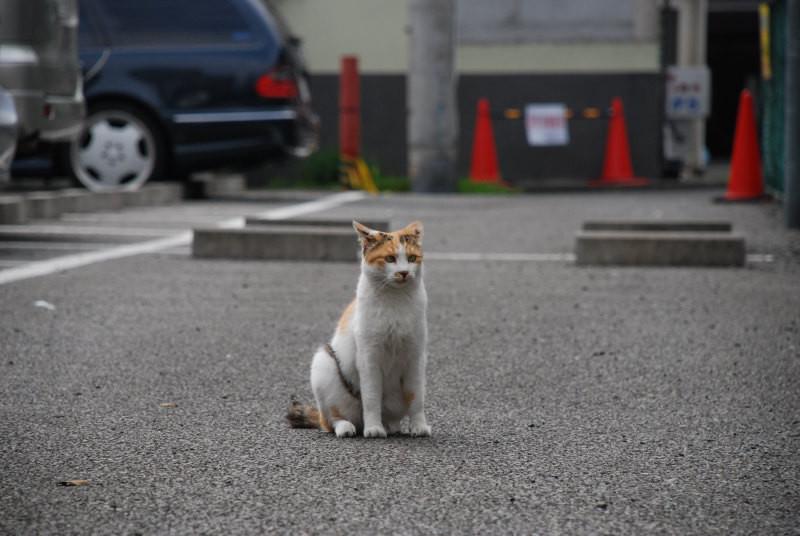 f:id:kuro0606:20101225203957j:image