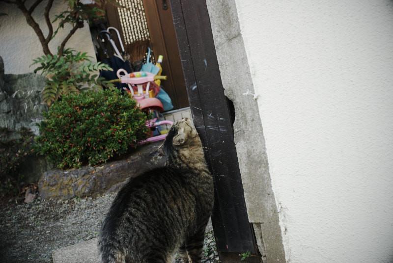 f:id:kuro0606:20101225204608j:image