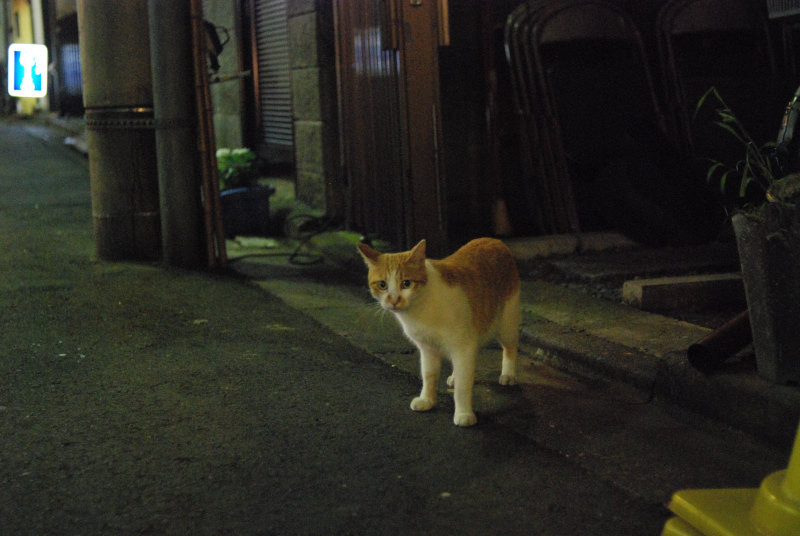 f:id:kuro0606:20101225204614j:image
