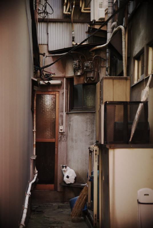 f:id:kuro0606:20101225205717j:image