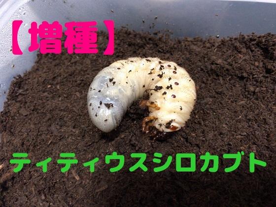 f:id:kuro1_dia:20190414141007j:plain