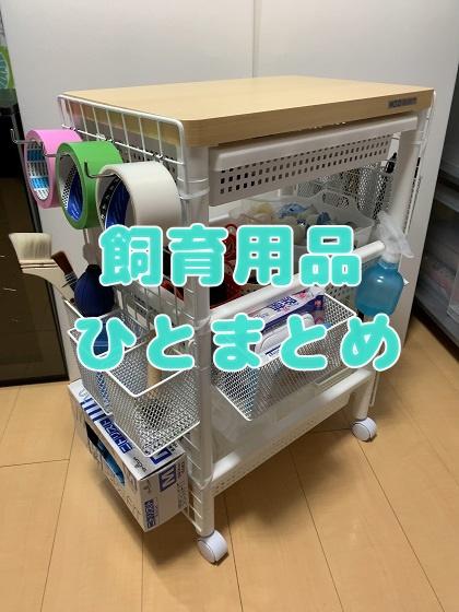 f:id:kuro1_dia:20200328180535j:plain