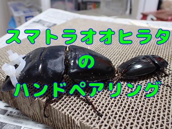 f:id:kuro1_dia:20200412180920j:plain