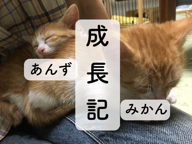 f:id:kuro6kuro6:20170827055636j:plain