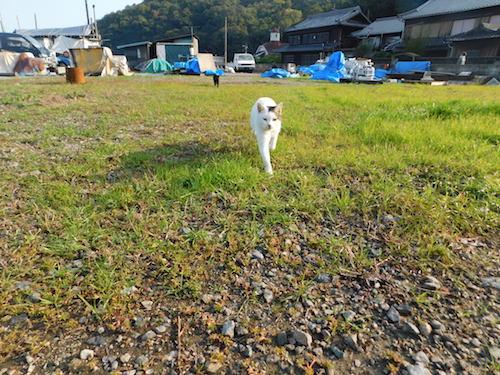 f:id:kuro6kuro6:20171221002306j:plain