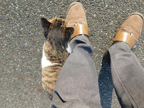 猫 擦り寄り