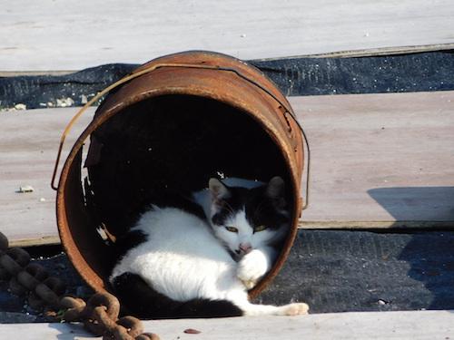 猫 ドラム缶 2匹