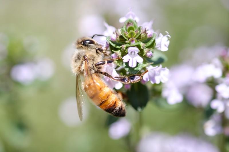 蜂 ハチ A8 アフィリエイト