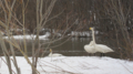 [鳥]砂川