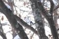 [森で][鳥]